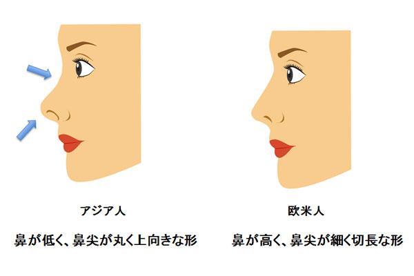 アジア人と欧米人の鼻